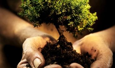 Adotta un albero in Puglia